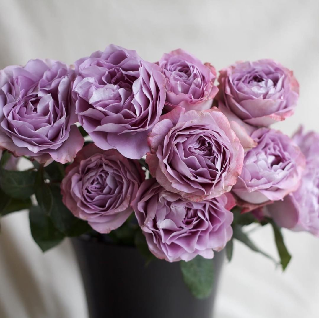 5 Heavenly Lavender Roses that You Will Love Lavender Bouquet Rose