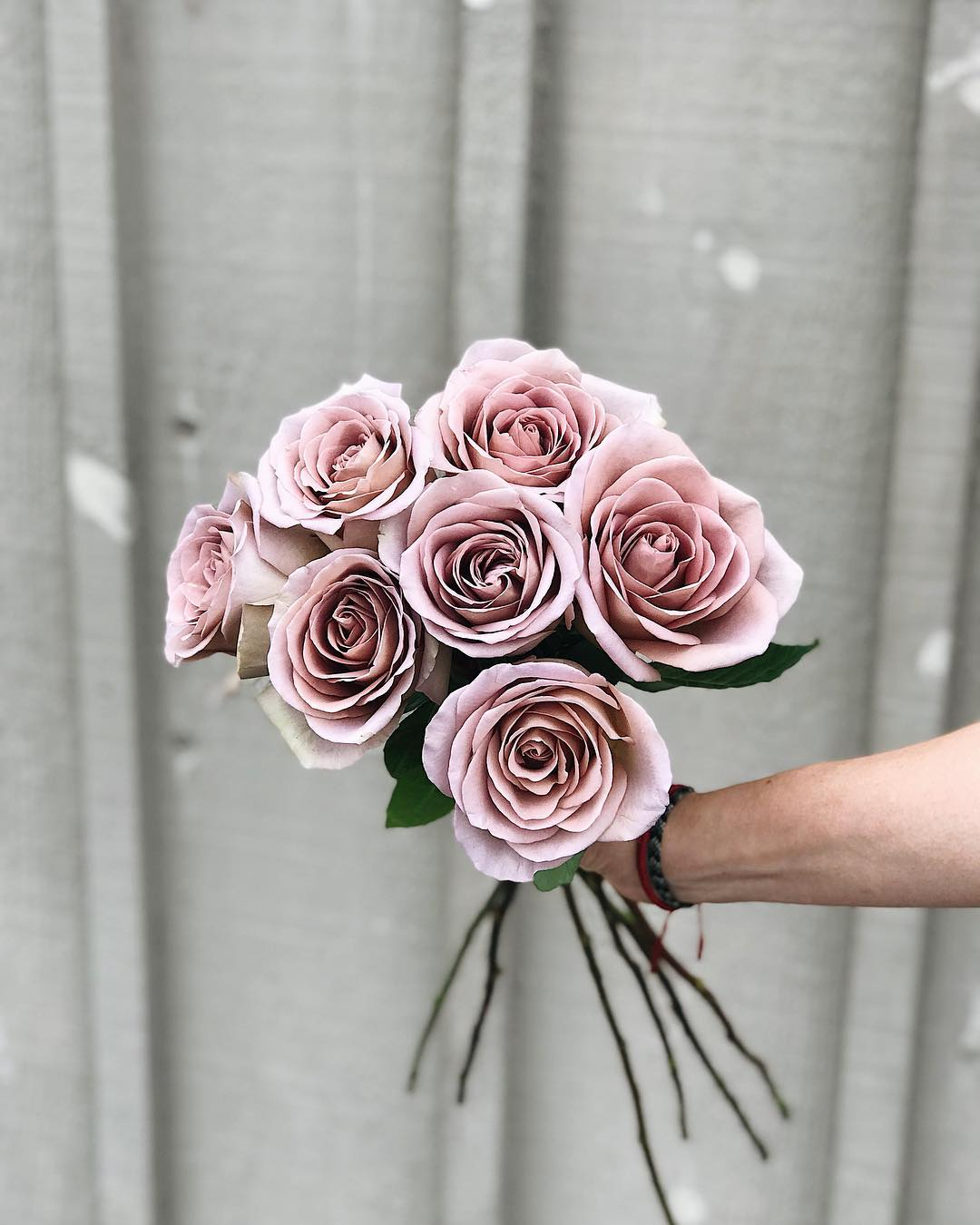 5 Heavenly Lavender Roses that You Will Love Amnesia Roses