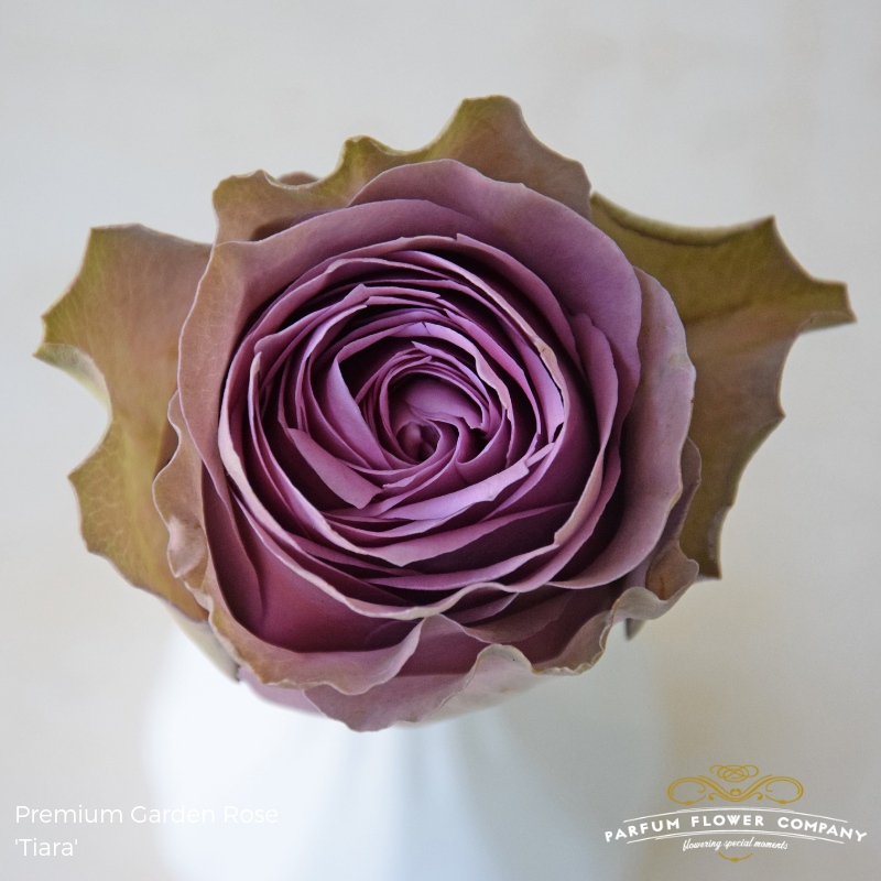 Lavender Roses Tiara